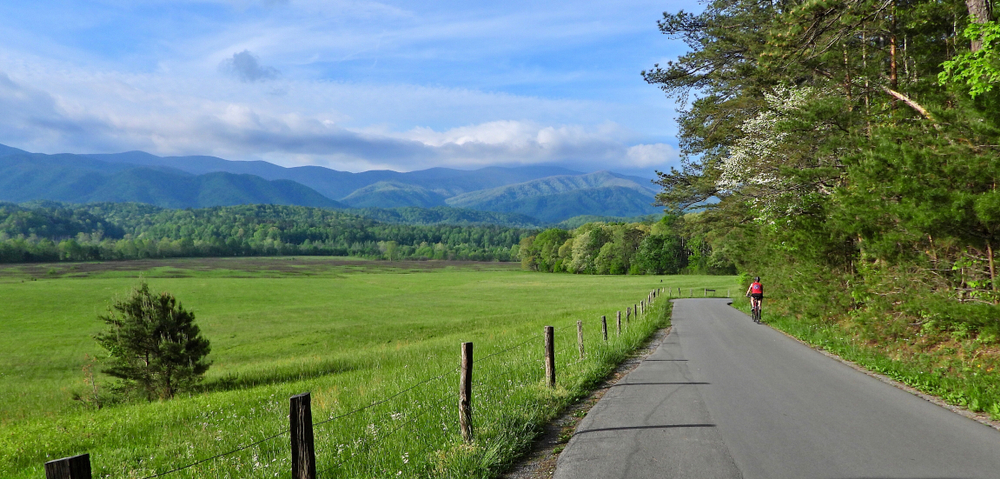 a bicyclist riding in Cades Cove