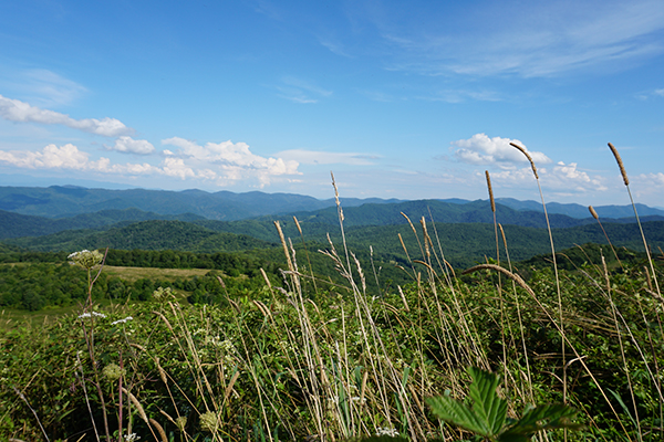 Max Patch and the Smoky Mountains